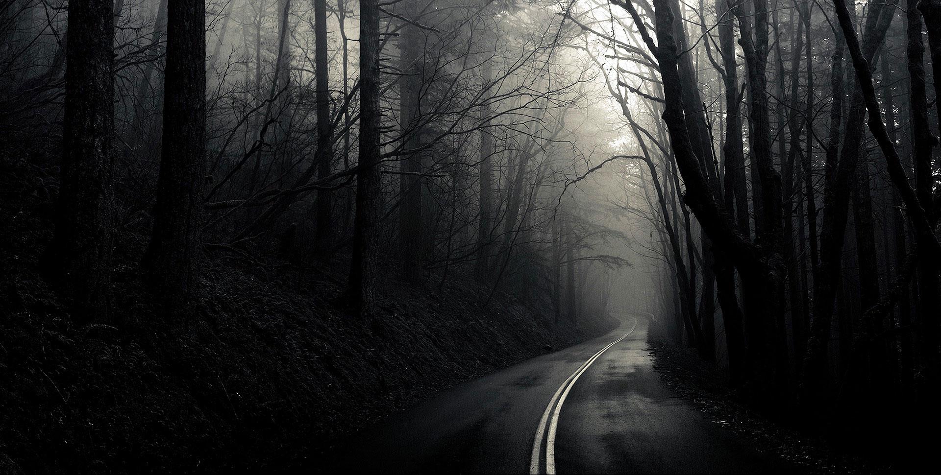 """Результат пошуку зображень за запитом """"нічний ліс"""""""