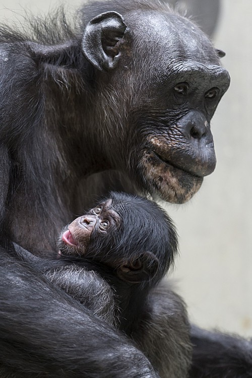 Switzerland Basel Zoo