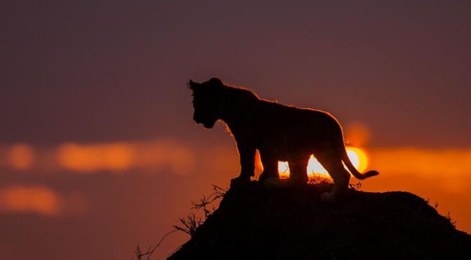 Фотографов много, сюжетов мало. Подборка великолепных закатов солнца