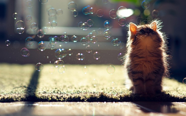Animals___Cats_Cat_and_bubbles_042257_