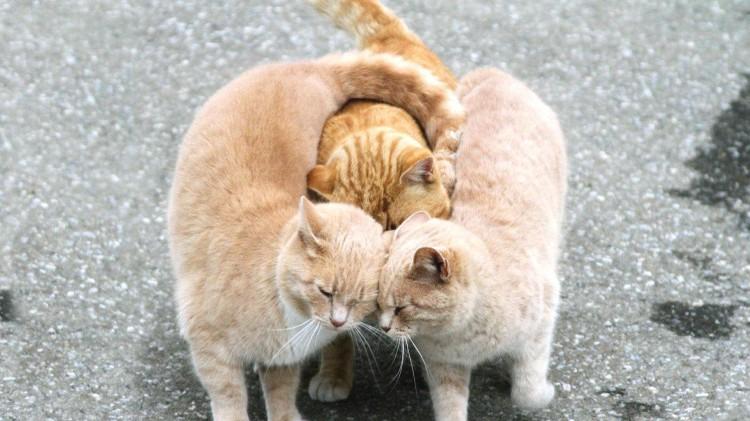 Cat-hug-hd-wallpaper