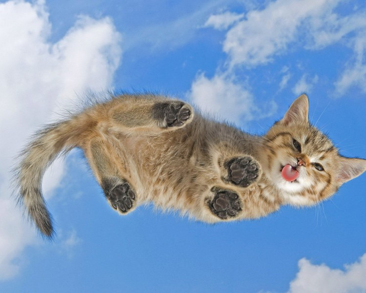 animals-wallpaper-with-a-cute-cat