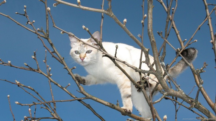 cat-climbing-the-thin-branches