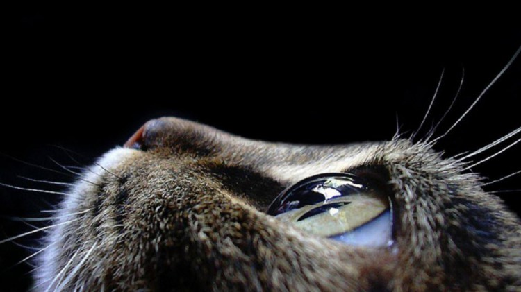 11519360-R3L8T8D-1000-animals-pictures-cat-eyes-macro-photography