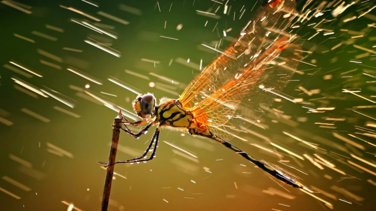 11529510-R3L8T8D-1000-macro-ventube-com-dragonfly-and-water-1173560