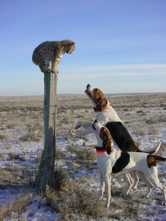 nature_cats_animals_desert_dogs_bobcats_serval_desktop_1200x1600_wallpaper-267405
