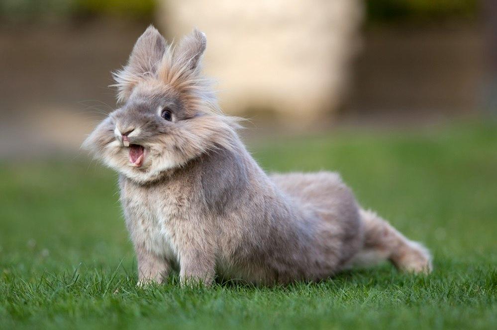 Rabbit-Roger