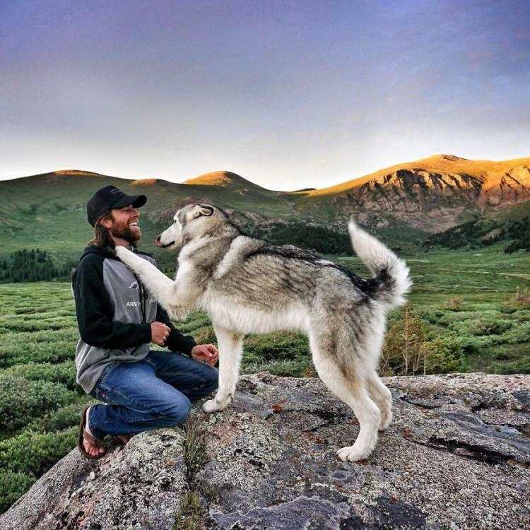 Loki-the-Wolfdog13__880