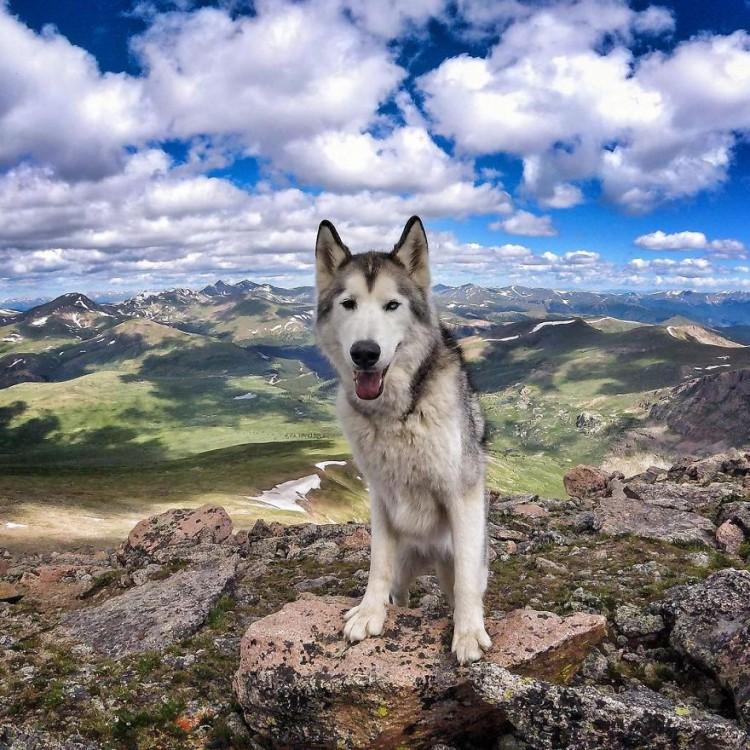 Loki-the-Wolfdog34__880