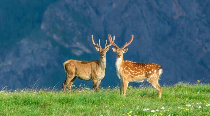 15 лучших фотографий о дикой природе России