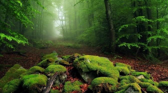 Журнал «Фокус» — «Красивая страна». Самые живописные места Украины
