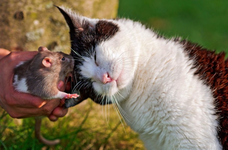the-kitty-and-rat-1045708-2560x1680