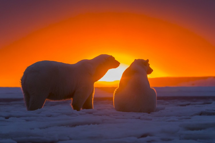 3720x2480_polyarnyie-medvedi-antarctica-antarktida-sneg-nebo