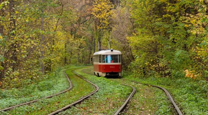 Прогулка по осеннему лесу. Пуща Водица, киевская область
