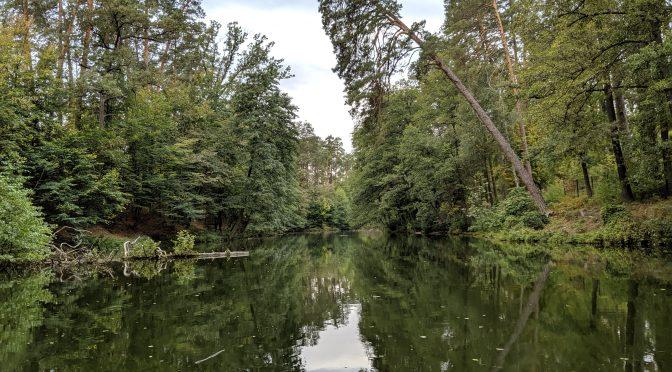 Осенний парк Пуща Водицы, киевская область